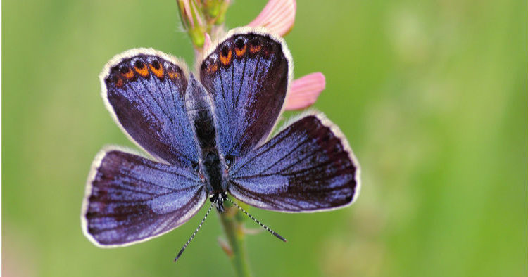 ber schmetterlinge die natur und mehr lepidopedia. Black Bedroom Furniture Sets. Home Design Ideas